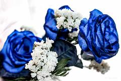 Rosas azules para un alma ardiente. (Edwin.1997) Tags: blue roses de y para negro una alemania todo tu rosas ramo fondo regalo castillo carta edwin nada malo amazonas azules amada salazar verdecora mesnada acompaalo