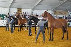 Entrega de trofeos, concurso Morfológico feria del caballo en Jerez de la Frontera