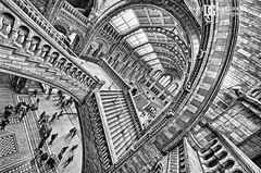 London Escher (davidgutierrez.co.uk) Tags: uk blackandwhite bw building london art museum architecture photography arte graphic geometry perspective surreal wideangle escher naturalhistorymuseum nhm escheresque linesandcurves davidgutierrez sigma816mm pentaxk5iis