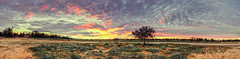Island tree (GarethToms.) Tags: sunset panorama tree clouds downs rocks desert clay pan sa roxby