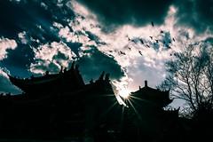 Temple's twilight (espada842) Tags: china street city travel urban sun color film beautiful 35mm canon landscape photography twilight seagull sigma cine snap  kunming cina soar      angle