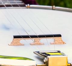 """Snuffy Smith"" banjo bridge (thinduck42) Tags: music macro bluegrass banjo panasonic gibson rb100 snuffysmith gibsonbanjo 5stringbanjo fz200"