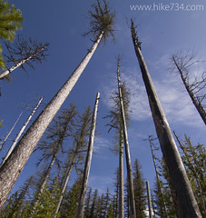 """Trees Reaching for the Sky • <a style=""""font-size:0.8em;"""" href=""""http://www.flickr.com/photos/63501323@N07/14222163906/"""" target=""""_blank"""">View on Flickr</a>"""