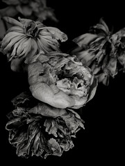 (Life_n2) Tags: flowers white black dark still bloom bouquet rotten 34