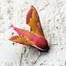 [1992] Small Elephant Hawk-moth (Deilephila porcellus)