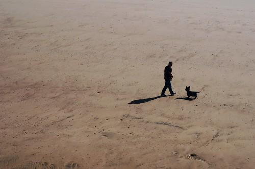 shadow dog beach sand walker