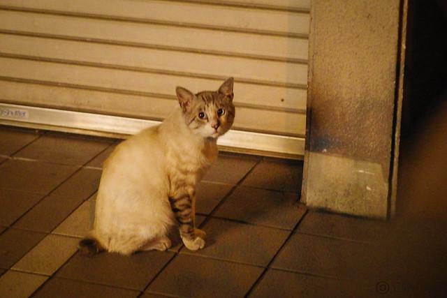 Today's Cat@2014-07-01