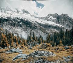 Rocks. Trees. Mountains.