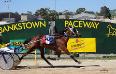 Bankstown City Paceway (pat.bluey) Tags: horses action ngc australia newsouthwales 1001nights flickraward 1001nightsmagiccity bankstownpaceway