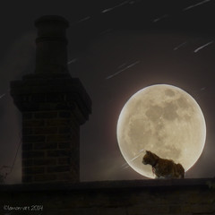 Moon cat (Lemon~art) Tags: roof chimney moon texture cat truthandillusion