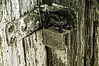 Bainbridge Georgia Shoot 6-14-2014 (richard.baas) Tags: door summer june statue rural georgia interestingness interesting nikon cemetaries rustic tracks culture trains professional textures rails bainbridge railways baas 2014 d300 southerndecay cutural richardbaas conservationphotography floridaphotographers richardbaasphotography richarddanielbaas