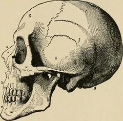 Anglų lietuvių žodynas. Žodis cranium reiškia n kaukolė lietuviškai.