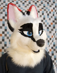 Ark4 (OMG Pineapples) Tags: jackal head arctic fox ard fursuit adustus omgpineapples
