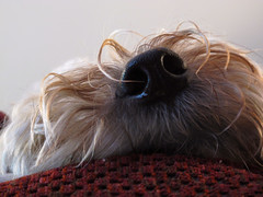 different perspective (Eric.Ray) Tags: dog digital canon project nose photo perspective 365 g12 maggiemae