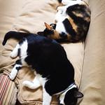030 – Cat's Life thumbnail