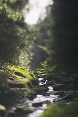 babbling... (CatMacBride) Tags: edge80optic composerpro lensbaby landscape ireland river brook babbling forest sunlight sunshine dappled