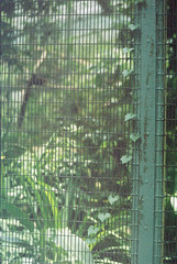 F1000001_lr (chi.ilpleut) Tags: singapore 2017 myday march outdoor outing film ilovefilms shootfilm kodakfilm expiredfilm jurongbirdpark birds seeing greenery ilovegreen analogue analog track grain