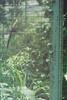 F1000001_lr (chi.ilpleut) Tags: singapore 2017 myday march outdoor outing film ilovefilms shootfilm kodakfilm expiredfilm jurongbirdpark birds seeing greenery ilovegreen analogue analog track grain