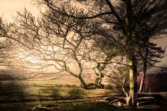 Let There Be Light (OATH Photography by Alison Richards) Tags: padleygorge derbyshhire peak district landscapephotography artphotography trees vista