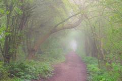 Attenborough Atmospheric Greens (Julian Barker) Tags: attenborough nature reserve nottingham nottinghamshire spring green mist fog trees footpath path route atmosphere julian barker canon dslr 600 creativity creative block