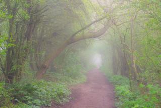 Attenborough Atmospheric Greens