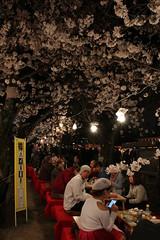 IMG_6415 Maruyama Koen (drayy) Tags: kyoto japan gion temple kiyomizudera maruyamakoen park sakura cherryblossoms 日本 京都 清水寺 円山公園 花見 桜