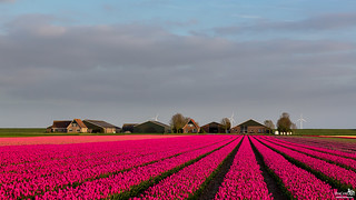 Wonderful flower field at front of the farm
