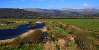 Ynys-hir RSPB Nature Reserve - Wales 240317 (2)