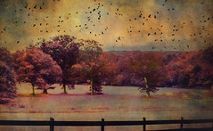 Lucid Ethereal Dream (Creative Photo Images, LLC) Tags: dream ethereal esotheric landscape surreal faraway thebirds lucid flying digitalpainting photograph topaz niksoftware photoshop colorful texture