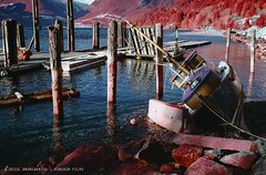 Howe Sound, BC. Kodak Aerochrome 1443 color infrared film. #colorinfrared #colorinfraredfilm #shootfilm #aerochrome #analoguephotography (hirudinphoto) Tags: colorinfrared colorinfraredfilm shootfilm aerochrome analoguephotography