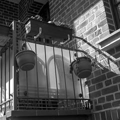 Roll #51 Lomography Earl Grey 100 (coffeepyros) Tags: bwfp lomography pentacon six tl carlzeissjena leipzig leipzigcity analog film filmisnotdead believeinfilm reudnitz