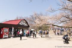 Mt Takao Summit (takashi_matsumura) Tags: hachiōjishi tōkyōto japan mt takao tokyo sigma 1750mm f28 ex dc os hsm ngc cherry blossoms sakura
