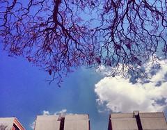 Jacaranda primaveral. (andreasaldaña) Tags: cdmx méxico cielo fotografíamexicana primavera jacaranda