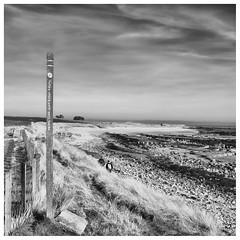Going Coastal, Kingsbarns (wwshack) Tags: fife fifecoastalpath firthofforth kingsbarns scotland longdistancefootpath signpost walk walking