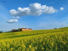 I colori della primavera (BORGHY52) Tags: primavera aprile italy provinciadialessandria felizzano nuvole nuvoleincielo nuvolecomepensieri nubi cielo cieloazzurro erba erbamedica colza colzainfiore casolare casolareabbandonato paesaggio landscape giallo yellow