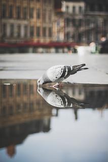 Oiseau à la grise robe