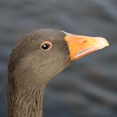 252 (AO'Brien) Tags: arklow wicklow autumn birds