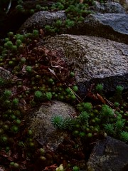 Rock Garden (Chancelrie) Tags: outdoor plant pacificnorthwest vancouver britishcolumbia kitsilano