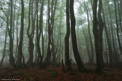 Creepy forest (Hector Prada) Tags: bosque otoño misterioso encantado niebla atmosfera hojas musgo naturaleza forest autumn misterious leaves fog mist moss atmosphere creepy charmed paisvasco basque country sensations nature