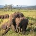 Gentle Giants of the Serengeti