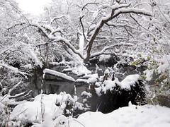 IMG_2838 (sjj62) Tags: s90 snow snowscape lith lakeinthehillsil winter winterscape
