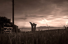 Handstand in the Barley field.. (Scottish Mary Moo) Tags: childishfun carefreefun sillhouette barley harvest arran isleofarran crop farmland sepia ayrshire northayrshire scotland scottish westkilbride fineart artistic fun sunset
