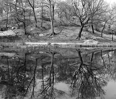 Meer Detail I_bw (Joe Josephs: 3,122,834 views - thank you) Tags: centralpark landscape landscapephotography manhattan nyc newyorkcity spring springcolor springtime travel travelphotography cityscape exploring joejosephs outdoorphotography parks quiet scenic serene tranquil urbanexlporation urbanparks â©joejosephs2017 blackandwhitephotography blackandwhite centralparknewyork ©joejosephs2017