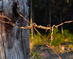 Wire fence at sunset (Ignacio de Luis) Tags: wire fence conceptual nikon 28mm abstracto alambrada