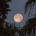 Morning Moon in Melbourne, Florida