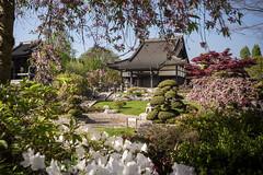 Düsseldorf - EKŌ-House (zenofar) Tags: nikon d810 deutschland germany ekōhouse düsseldorf japan japanisch garten buddhismus tempel asien asiatisch frühling blüten japanese garden buddhism temple asia asian spring blossoms