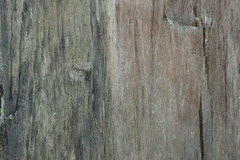 IMG_6614 (VVITAD) Tags: tree wood material backgrounds plank grain striped paneling blue timber weathered textured closeup carpentry arts culture entertainment hardwood full frame surface level outdoors no people architecture day