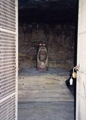 img006 - Shiva liṅgaṃ (6khz) Tags: liṅgaṃ lingam cave udayagiri caves sanchi madhya pradesh shivling shiva india