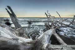 DSC05866 (dgrano20) Tags: big talbot island state park sonya7ii tokina1116mm beach