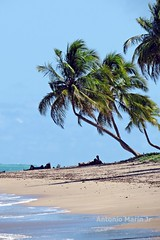 Praia do Patacho - Porto de Pedras - Alagoas - Brasil (Antonio Marin Jr) Tags: antoniomarinjr praiadopatachoportodepedrasalagoasbrasil pernambucobrasil praias praia beach landscape paisagem brasil travel portodepedrasalagoasbrasil
